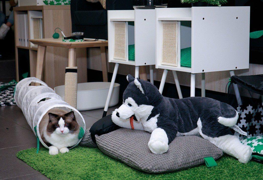 LURVIG寵物玩具隧道,提供貓咪躲藏和追逐的空間。圖/IKEA提供