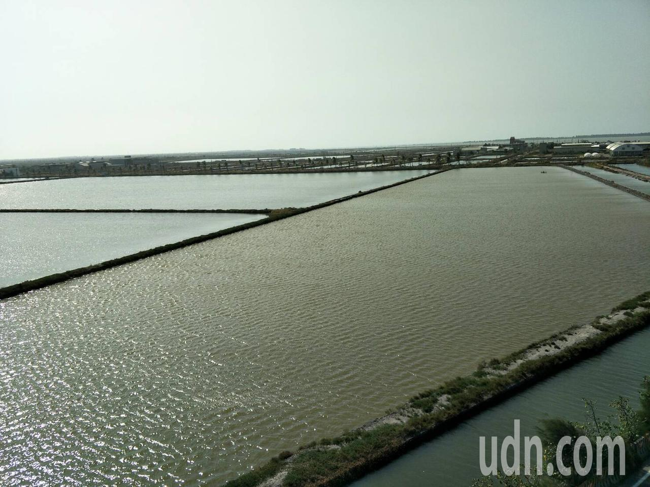 台南七股文蛤養殖業居全市之冠,圖為大片淺坪養殖魚塭。記者謝進盛/攝影