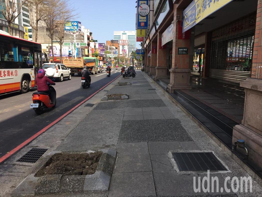 記者今天實地走訪處人行道,十多棵櫻花樹已經移除,僅剩水泥樹穴,部分樹穴裡還看得見...