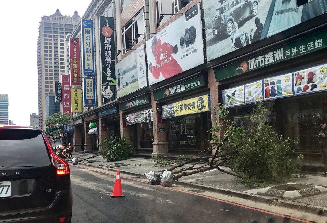 桃園市桃園區中正路近大興西路段,人行道上原栽種多棵樟樹與櫻花樹,但近日卻被挖除移...