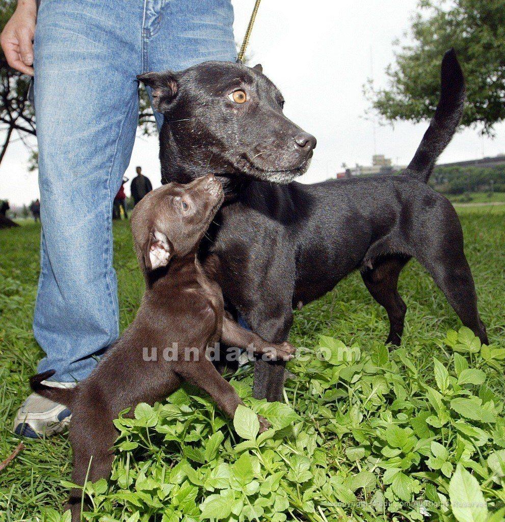 邱姓男子盛怒下勒斃黑狗,被檢方依動保法聲請簡易判決。圖為示意圖,與案件無關。圖/...