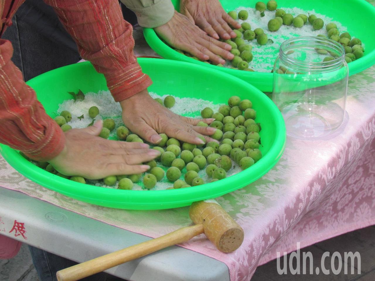 製作脆梅的第一步,把青梅放入盆裡,和著粗鹽用力搓揉。記者張家樂/攝影