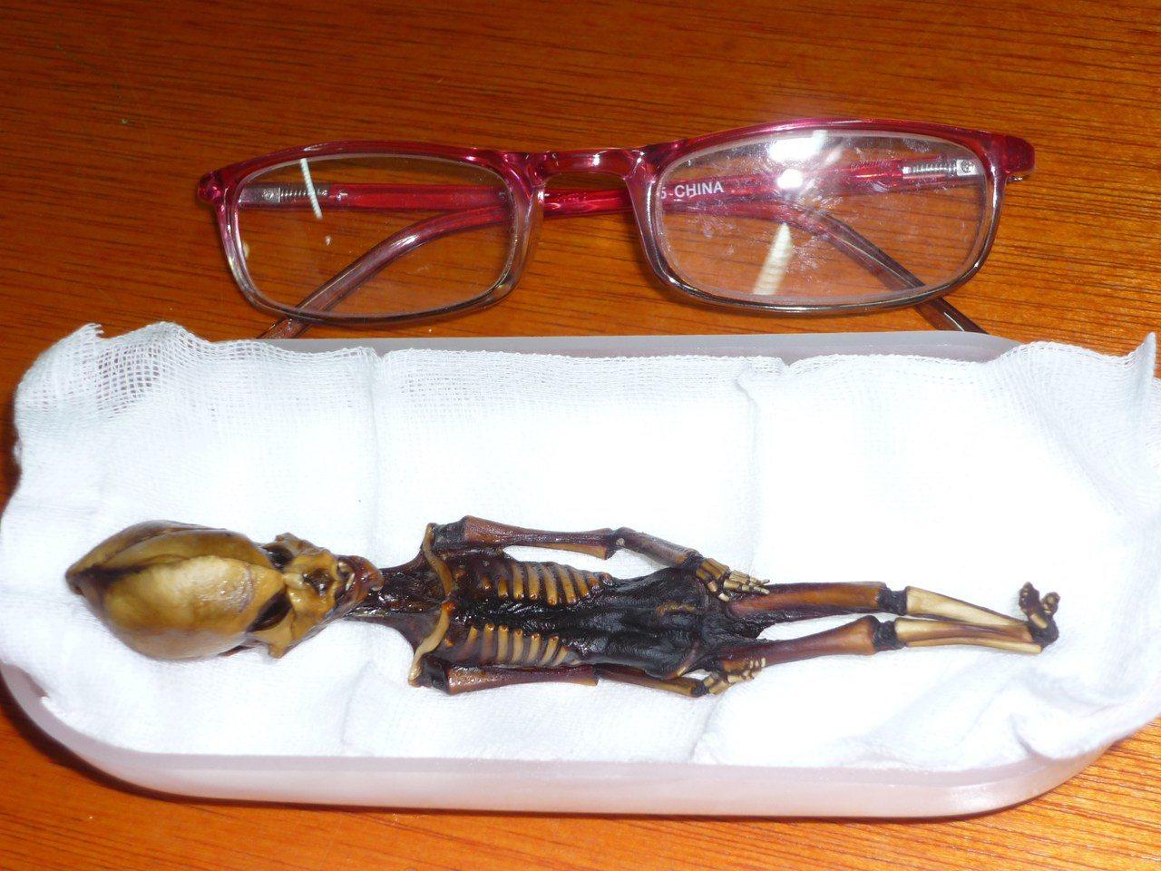 「亞他」木乃伊大小僅約15公分,骨骼初步分析卻又顯示,它的生前年齡相當於6到8歲...
