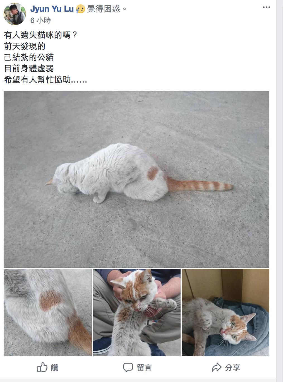 花蓮雲翠大樓管委會主委林葳飼養的公貓「喵喵」,在震後流浪40多天後,被人發現,透...