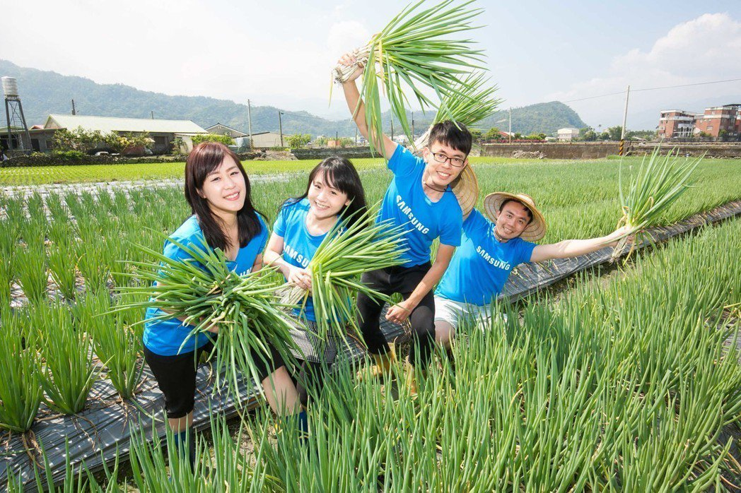 台灣三星三度舉辦「三星稻田認養公益計畫」志工活動,號召員工身體力行。圖/三星提供