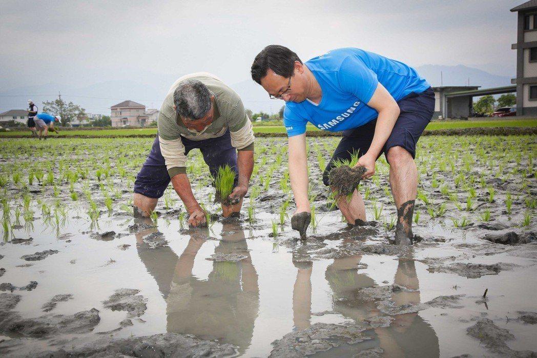 小農吳和南與台灣三星電子總經理李廷柱(圖右)一同彎腰插秧。圖/三星提供