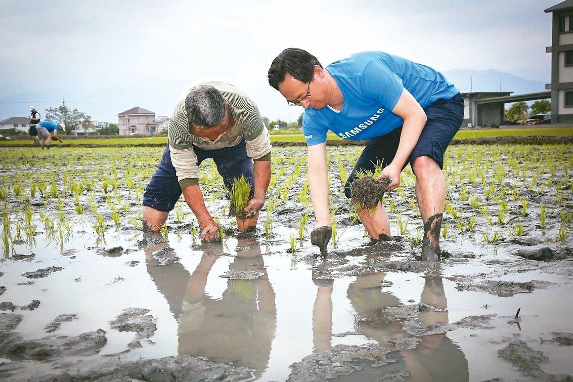 小農吳和南(左)與台灣三星電子總經理李廷柱(右)一同彎腰插下秧苗。 台灣三星/提...