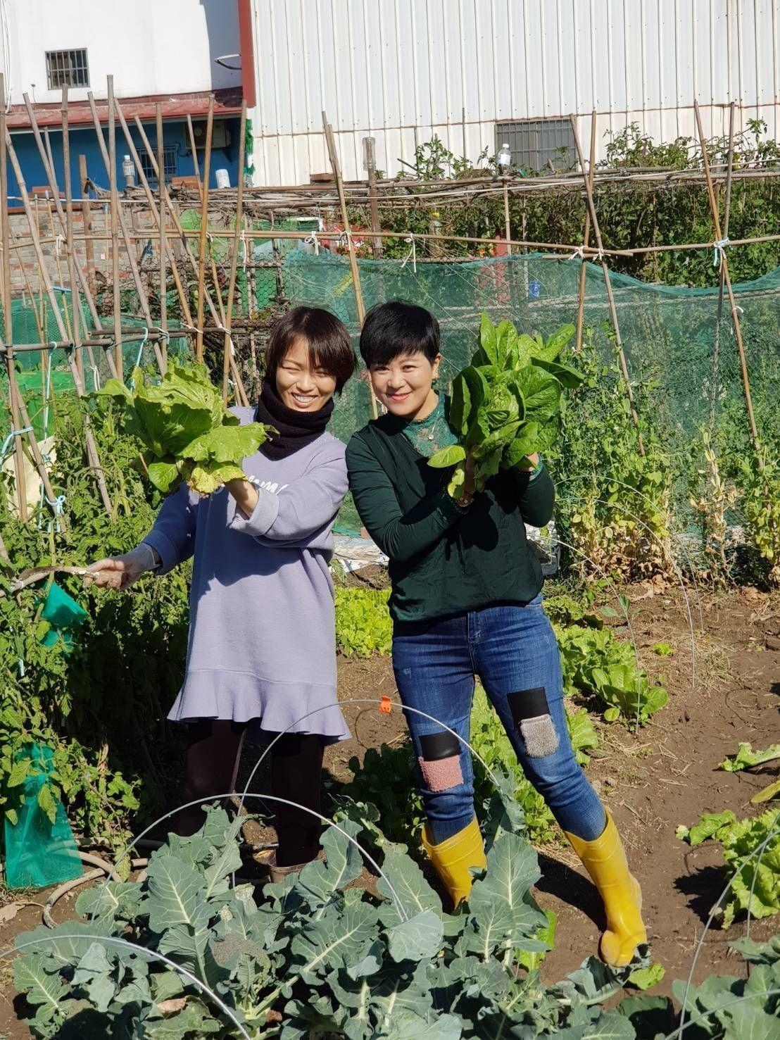 「陽光姊妹淘」成員在白妹妹的「開心農場」內,採了一大把的蔬菜。圖/白妹妹提供