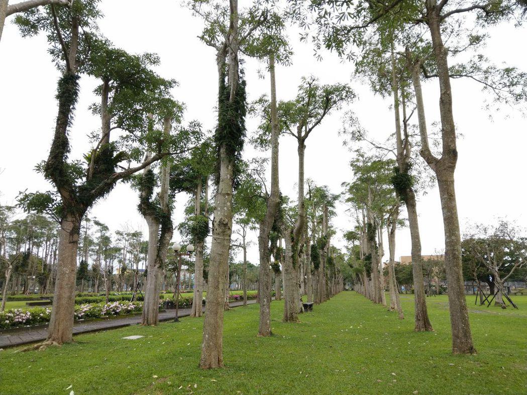 宜蘭運動公園是陳定南的代表作,園內的黑板樹沒人敢動,陳金德想全改種苦楝樹。 圖/...