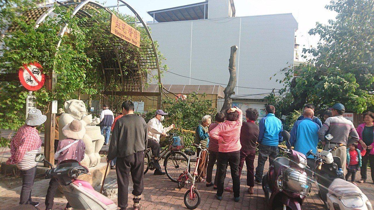 嘉義市嘉油鐵馬道旁一棵樹齡約40年芒果樹,原本枝繁葉茂,最近被過度修剪到只剩一根...