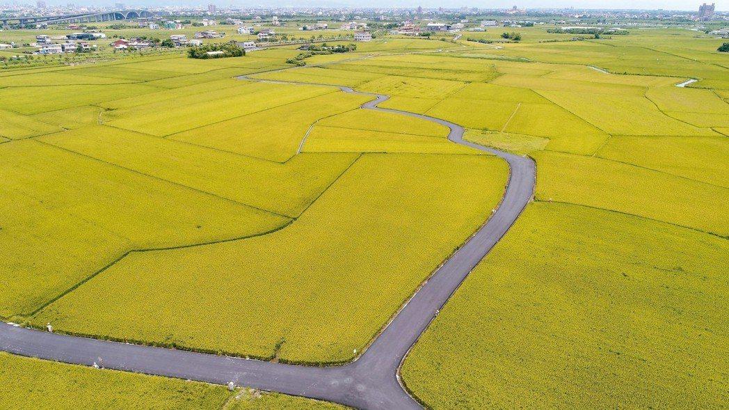 內政部長葉俊榮宣布全國國土計畫草案,全國農地將從九十三萬公頃,降為七十四到八十一...