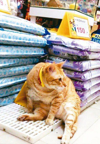 春節過後寵物也有肥胖、腸胃問題。 中圓寵物家族/提供