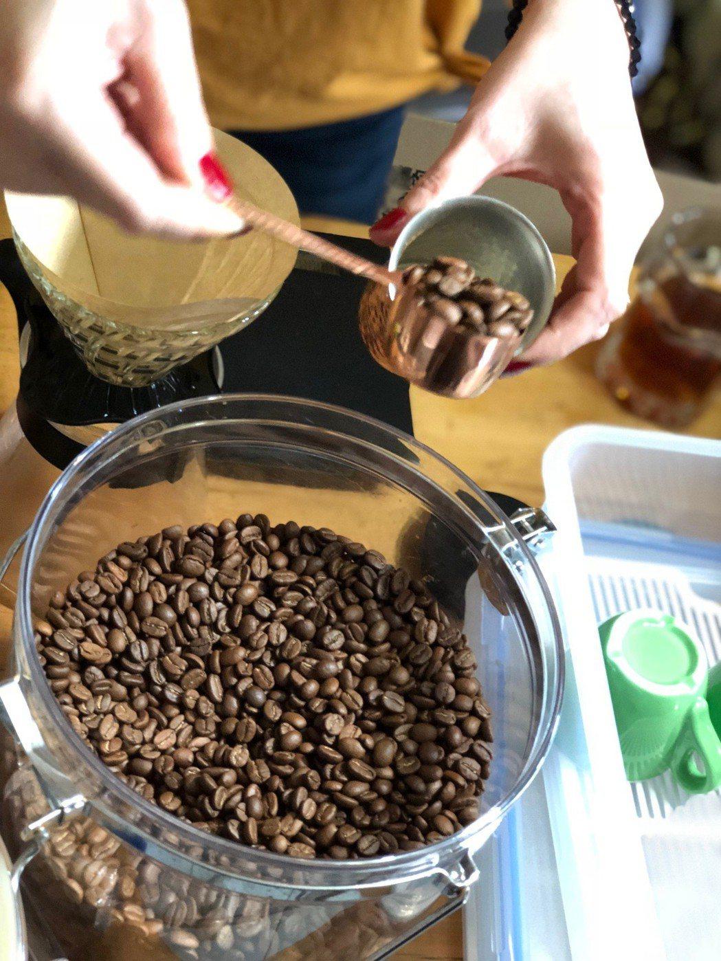 已經烘焙完成的麝香貓咖啡豆。記者黃文奇/攝影