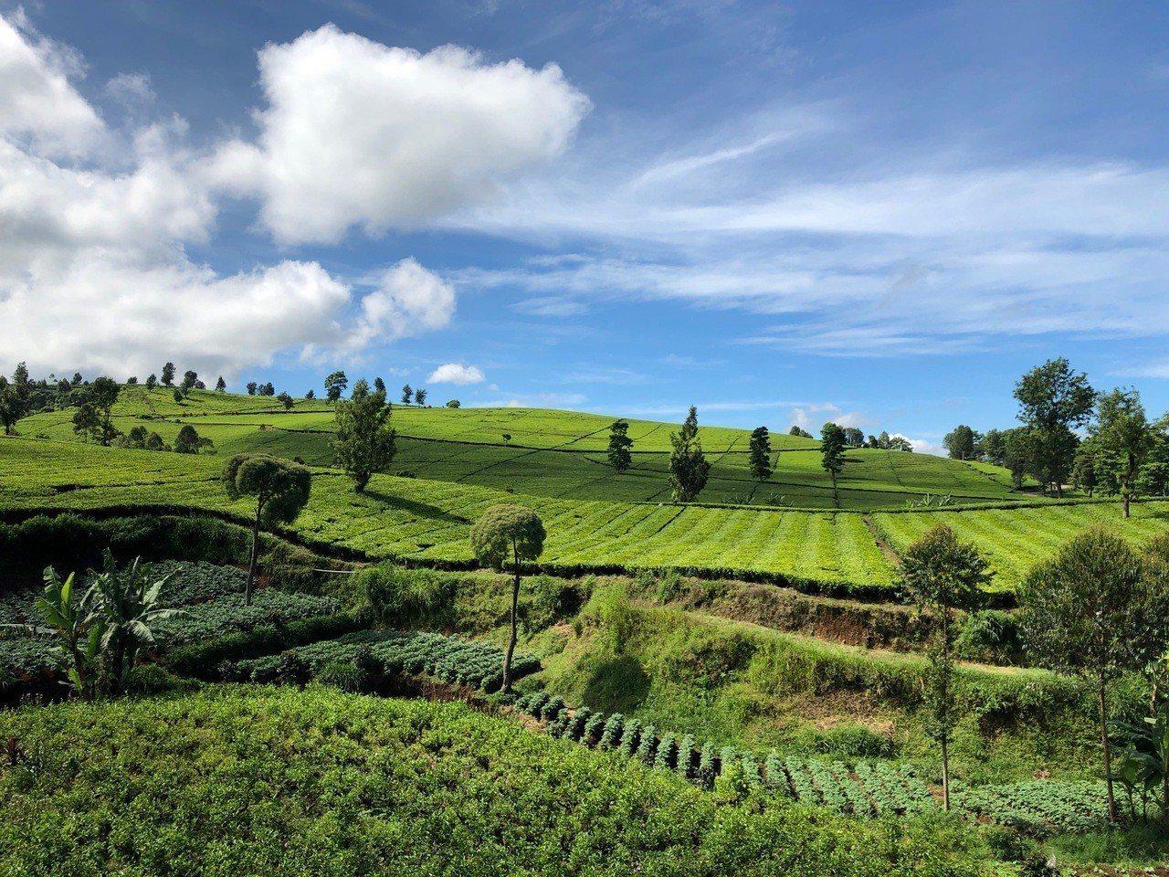 金色百林莊園位在海拔2,000公尺左右的山地,終年適合咖啡生長,因此也中出名聞遐...