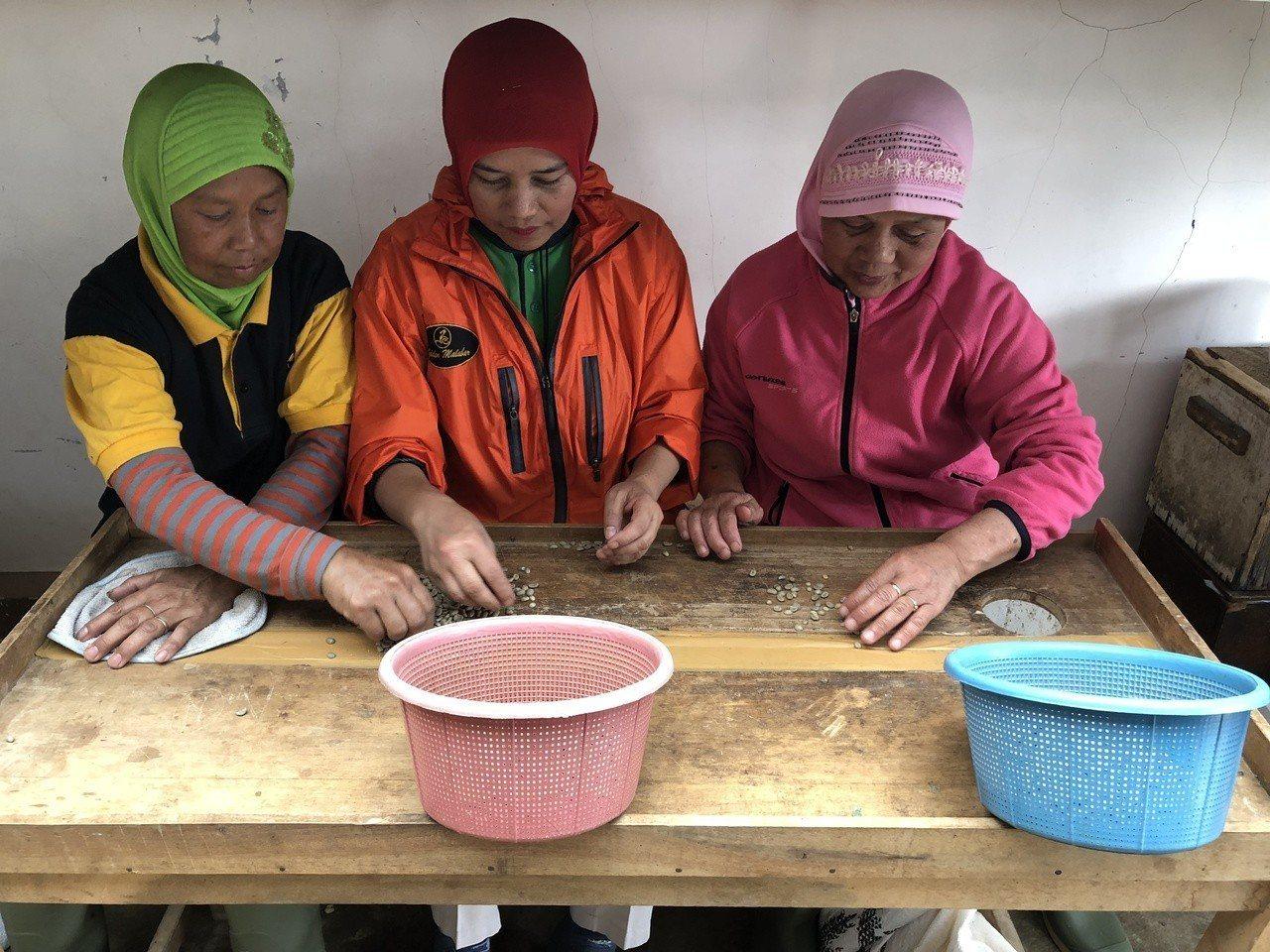 金色百林莊園的咖啡經過層層挑選,圖為印尼當地選豆婦女正在篩選咖啡豆的品質。記者黃...