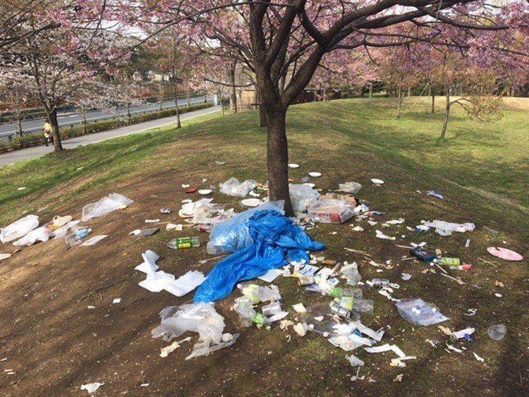 東京本周迎來櫻花的滿開期,各地都湧入了賞花人潮。都立舍人公園卻驚見櫻花樹下滿是遊...