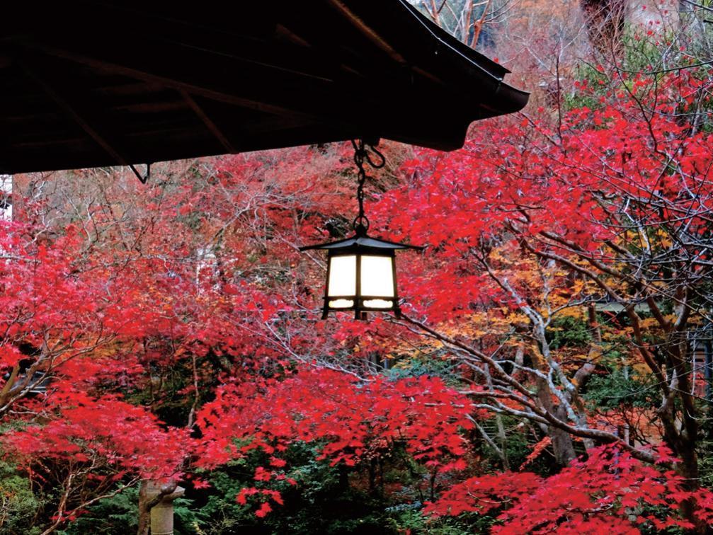 六義園一隅。《東京歷史迷走》/時報出版提供