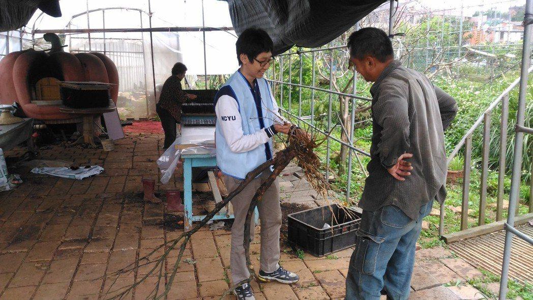 新北市首位實習植物醫師陳浩至幫助農友減低農藥的不當使用。圖/新北市農業局提供