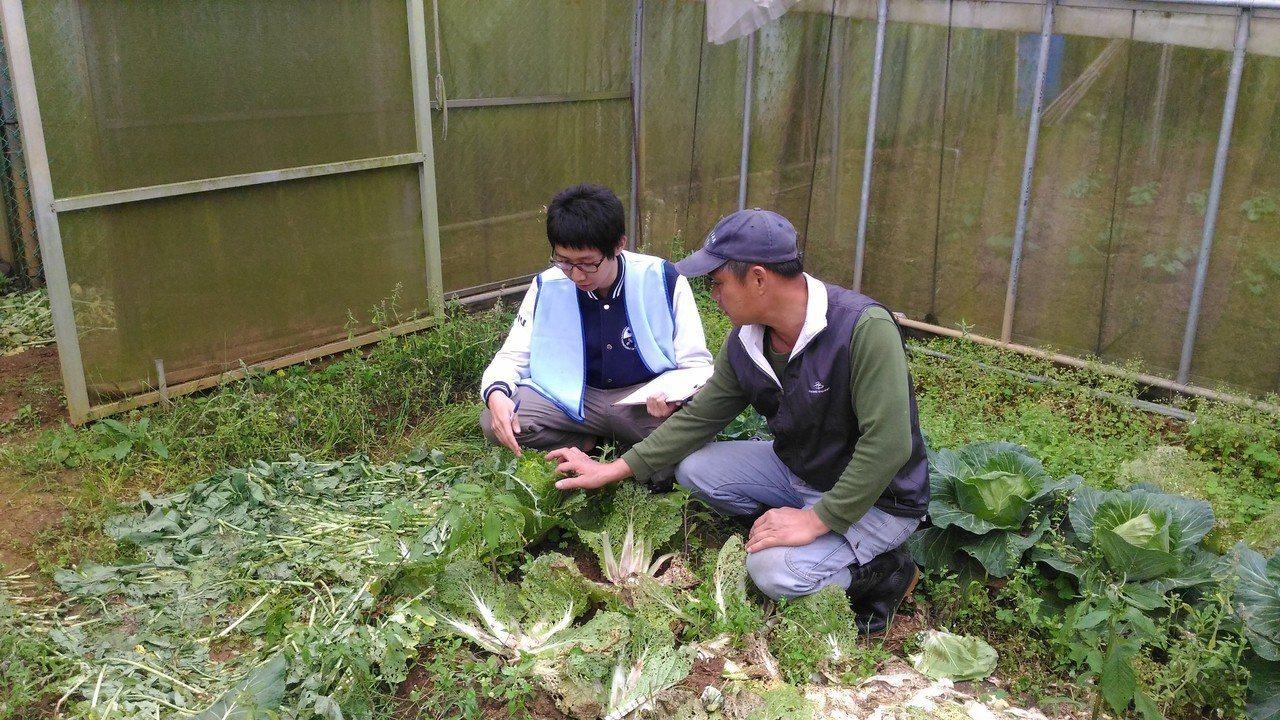 新北市首位實習植物醫師陳浩至幫助農友減少使用化學肥料。。圖/新北市農業局提供