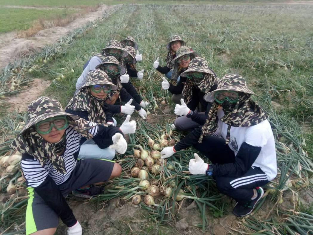 明道大學精農系學生全副武裝協助農民採收洋蔥。圖/明道大學提供