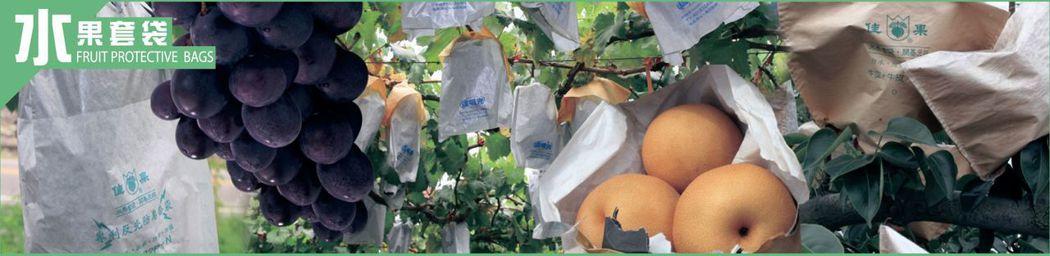 水果套袋為壯佳果引以為傲的核心價值 壯佳果/提供