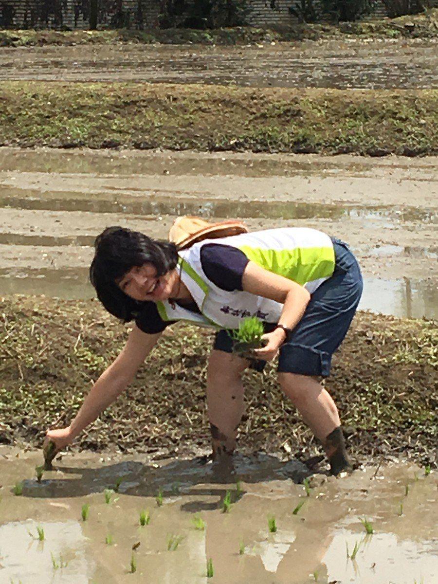 有美女議員之稱的市議員林裔綺體驗手工插秧,在太陽底下農作真的又熱又累,不過她認為...