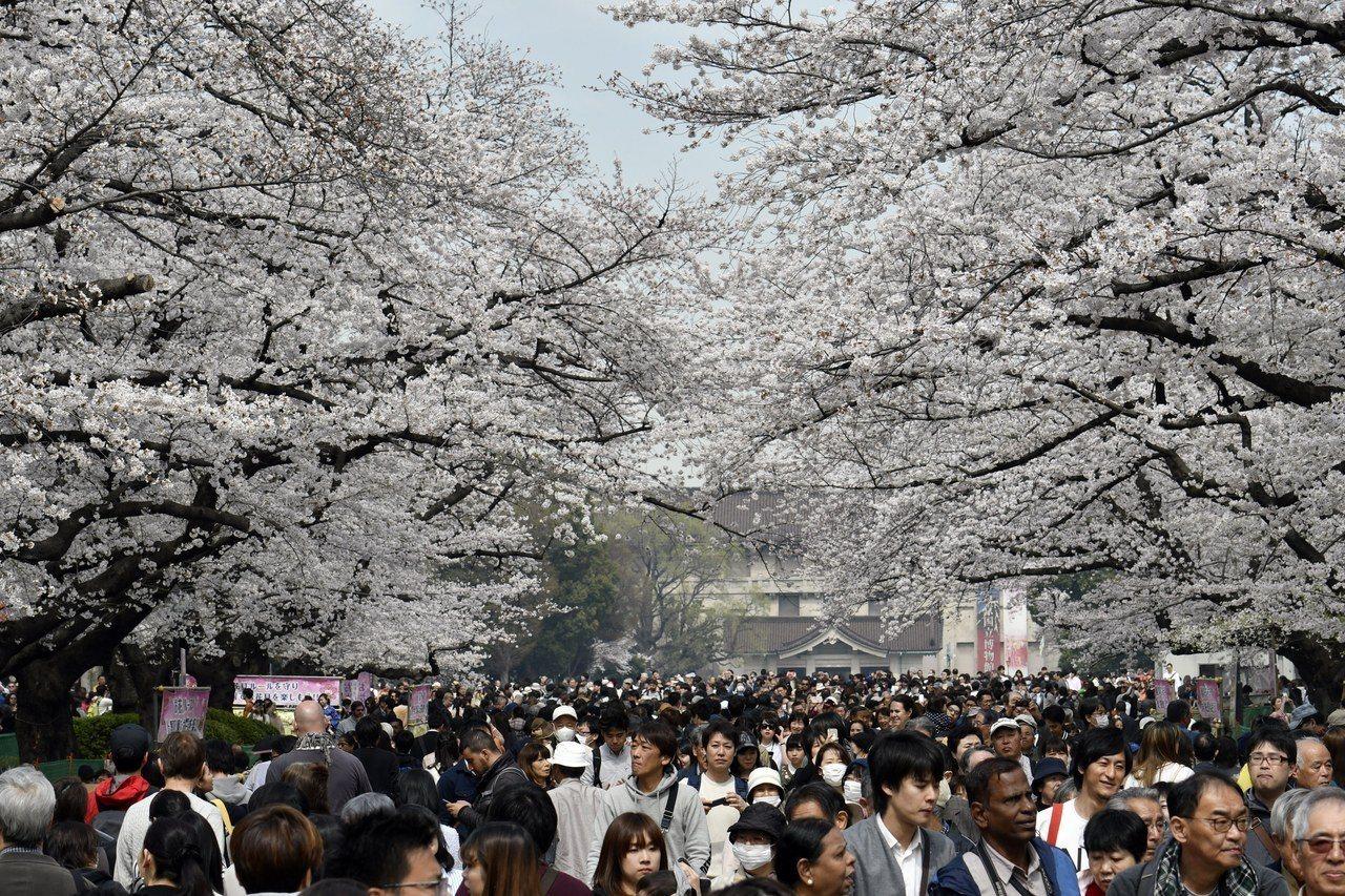 3月26日的東京上野公園櫻花盛放。歐新社
