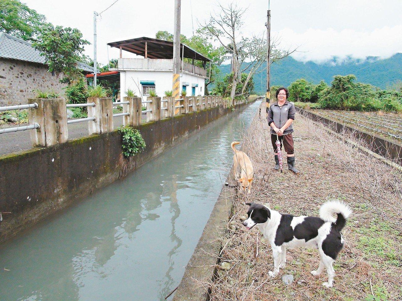 宜蘭農友周珊燕認養岸堤友善人、狗,要水利會別再噴除草劑了。 圖/聯合報系資料照片