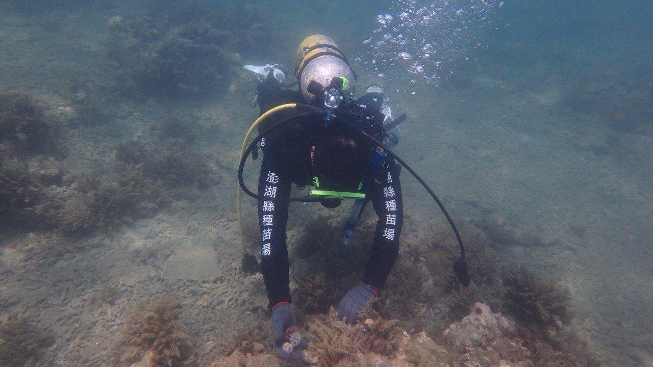 澎湖縣府104至106年度委託潛水人員清除覆網,過去3年共計清除海底覆網約3萬公...