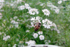 蔡明憲/養蜂真的能夠保育蜜蜂嗎?——談養蜂的誤解與挑戰