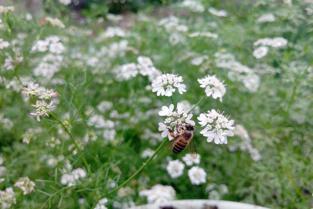 少用化學農藥,多種蜜源植物,提供蜜蜂友善的生存環境。 圖/作者自攝