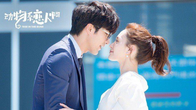 賀軍翔(左)與鍾欣潼在「動物系戀人啊」演夫妻。圖/CHOCO TV提供