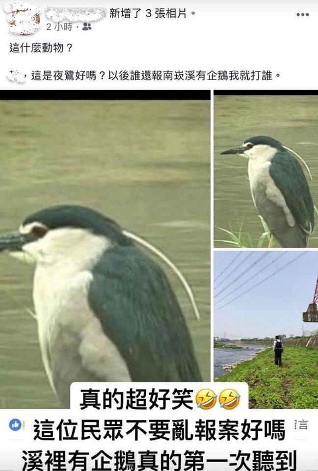 網友在臉書公開社團「TPC台灣鸚鵡聯盟」分享有熱心民眾向警方報案在桃園南崁溪發現...