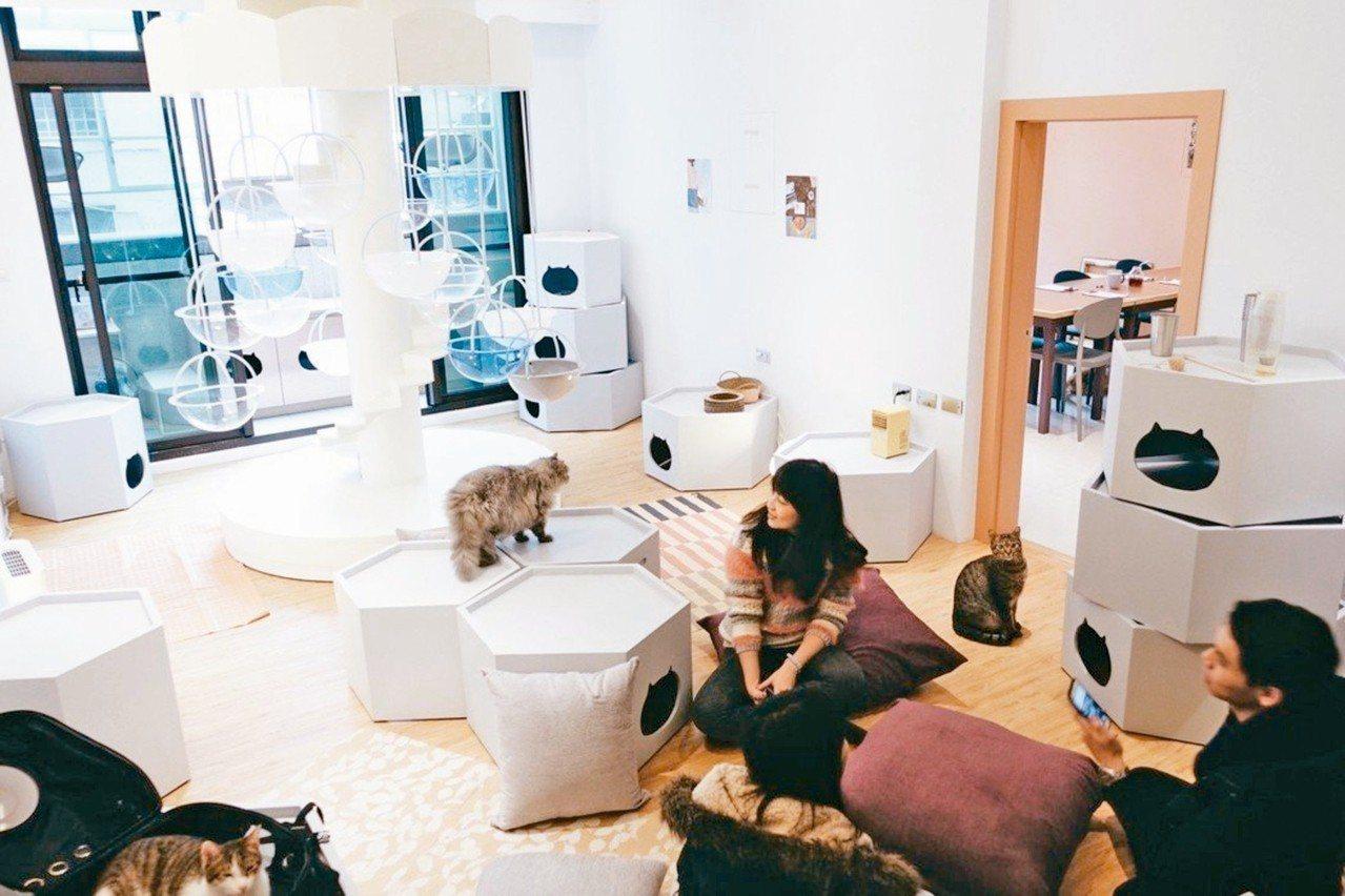 貓的生活提案打造人與貓共同生活的空間。 記者沈佩臻/攝影