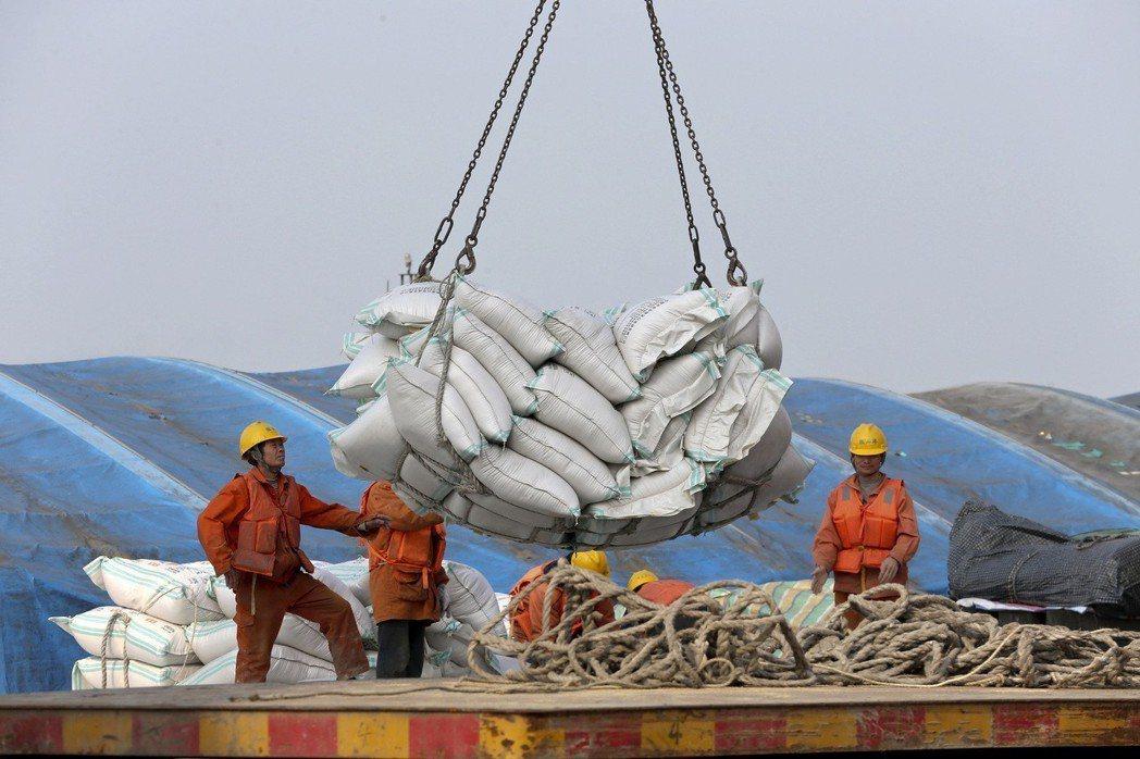 今年三月大陸江蘇省南通港的工人正在進行進口大豆的裝卸貨。圖/美聯社