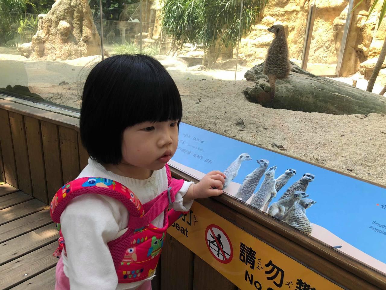 台北市立動物園是許多小孩愛去的場所,明年起將在淡季時間休園12天。記者陳靖宜/攝...