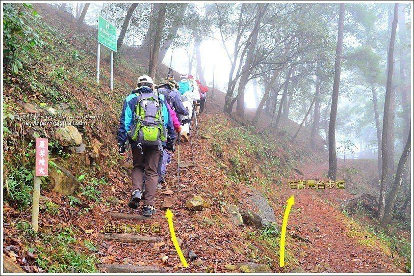 ↑先走左道環杜鵑嶺步道一圈,再回到此叉路轉往觀景台步道。更好的走法,是在梨園山莊...