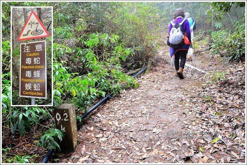 ↑湯公碑步道前段又稱森林浴步道,也是200公尺就立有一支里程樁。另外,林場內有幾...