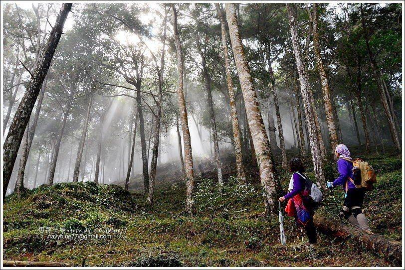 ↑走在霧裡也不必鬱卒,運氣好時就有機會看到超美的林隙光。