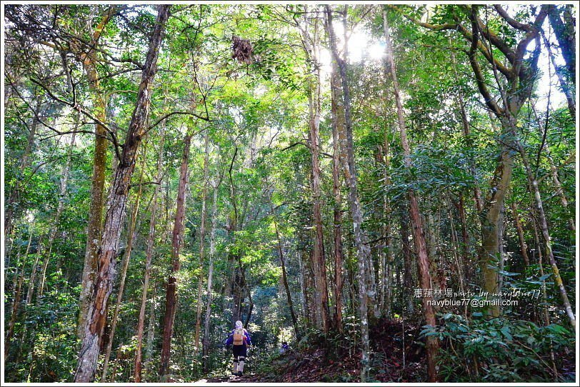 ↑一路都走在高大的樹林之中,芬多精吸到飽。