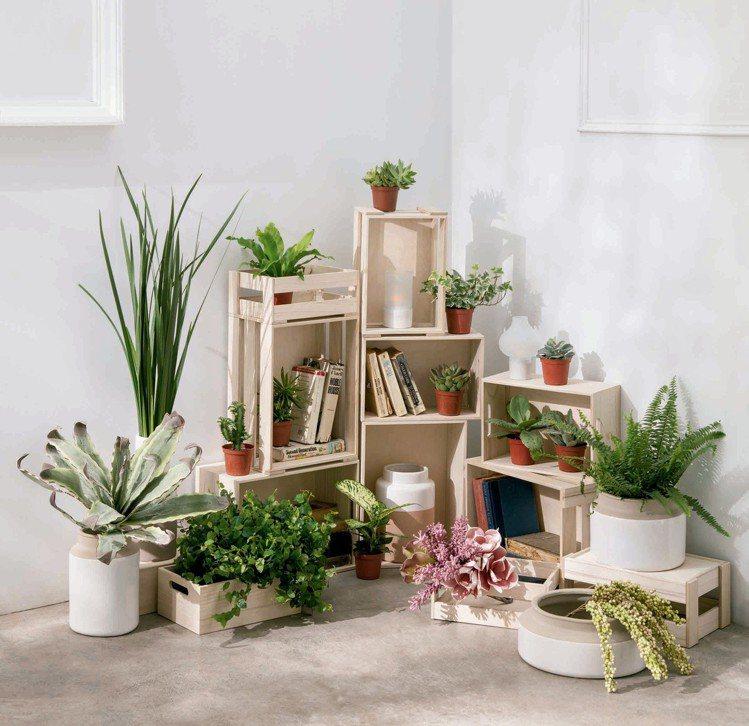 以單盆的綠色植物點綴居家環境,展現春意盎然。圖/HOLA提供