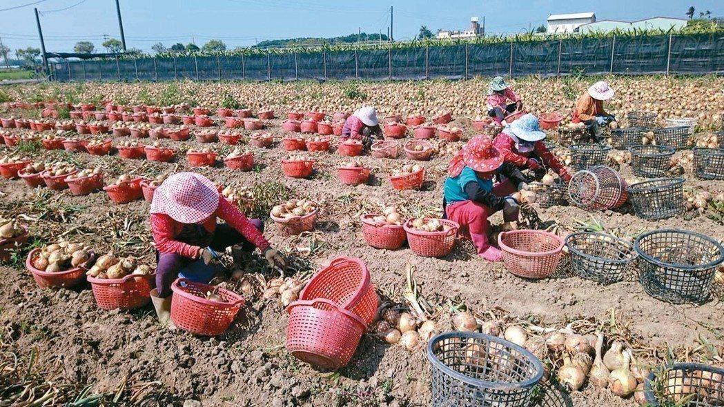 嘉義縣六腳鄉永賢村是全國最「老」的村落,每一百人中,有卅五人是六十五歲以上老人。...