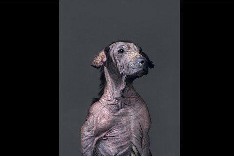 還給流浪犬一張「臉」——訪《生殤相》攝影師杜韻飛