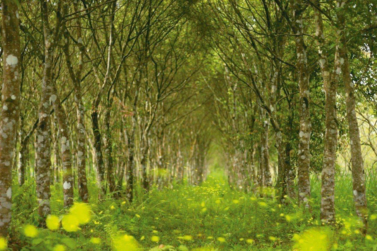 大農大富平地森林園區賞螢活動進入尾聲,4月15日截止。 圖/林管處提供