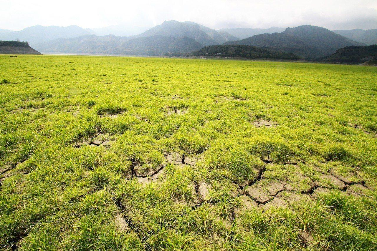 曾文水庫北側因泥沙淤積,乾涸水庫底成為一片綠色大草原。記者卜敏正/攝影