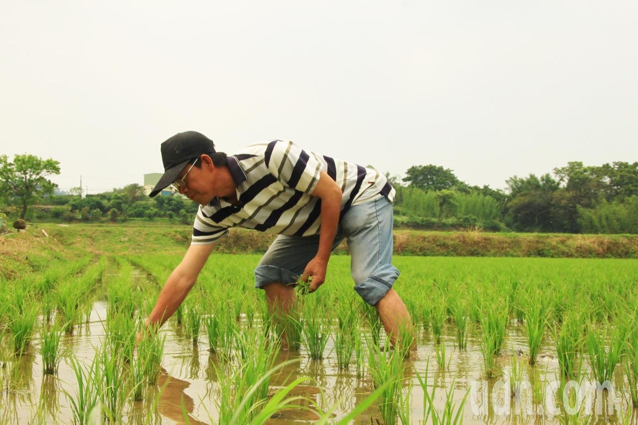 曾獲十大經典好米的冠軍農夫莊正燈更不捨,竹東二重、三重的農地無汙染、水質佳,已有...