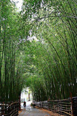警界退休的謝德忠寄情於祖產1公頃的竹林,每周5天上山整理竹林,被形容是台灣版的嵐...