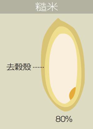 糙米 繪圖/Ms. Cat