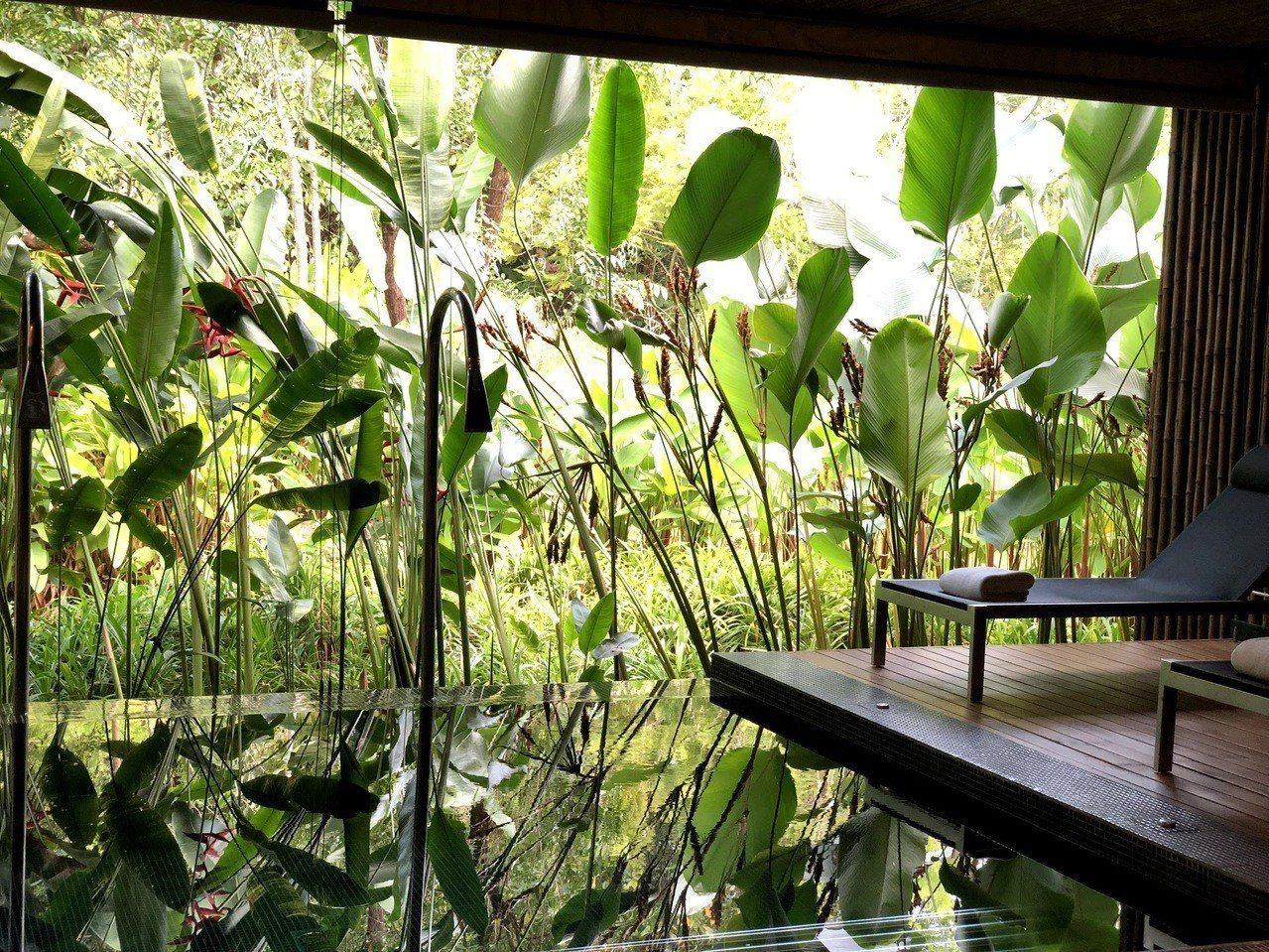 五星級飯店內的SPA水療中心,綠植物布置就令人相當放鬆。