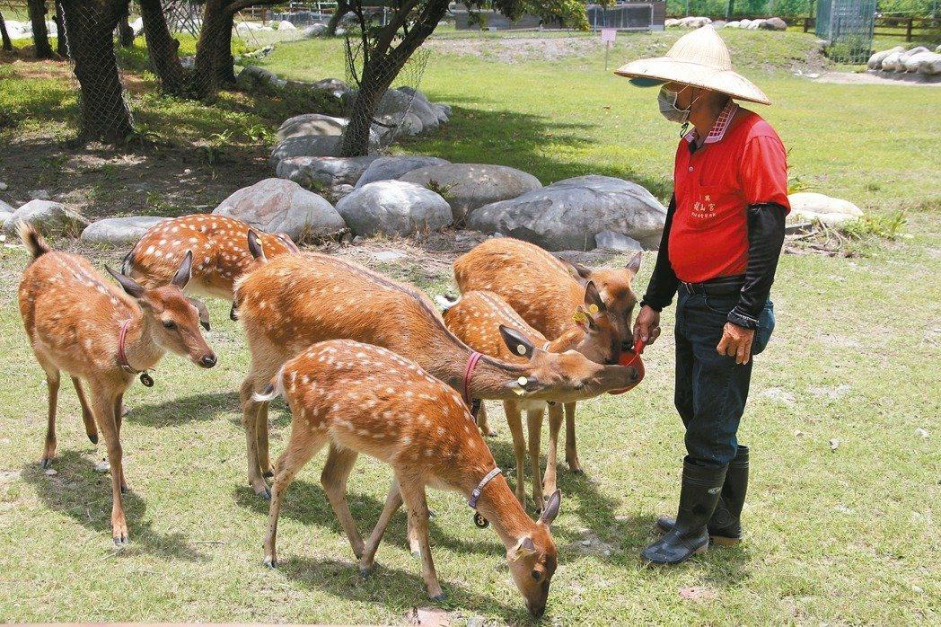 鹿港鎮的鹿園因公鹿暴斃,確認感染牛結核病後從去年7月初封園至今。 圖/聯合報系資...